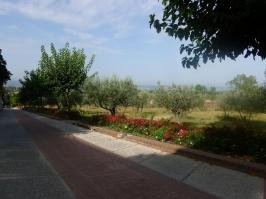 Strada mattonata di Assisi